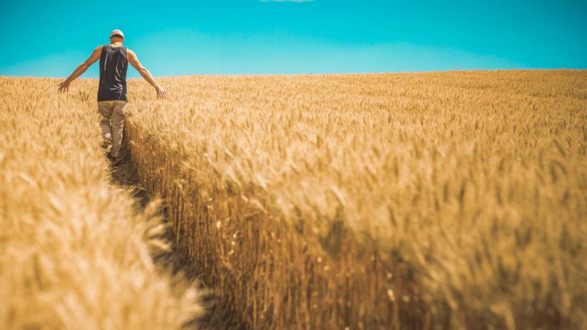 Le pratiche colturali per produrre grano di qualità in quantità