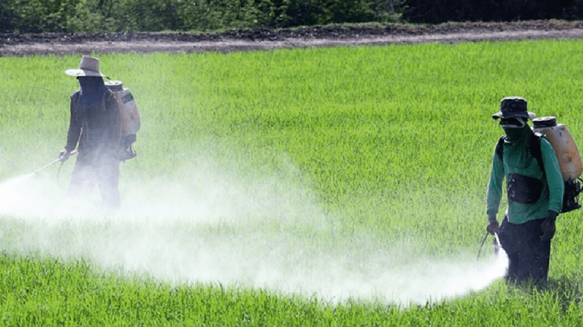 Europa leader per i cibi privi di pesticidi