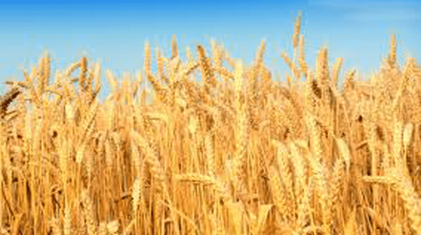 In Francia la nuova legge sull'alimentazione non piace agli agricoltori