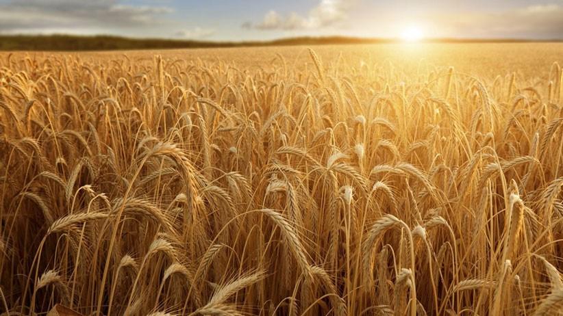Al via l'accordo Barilla-Crédit Agricole