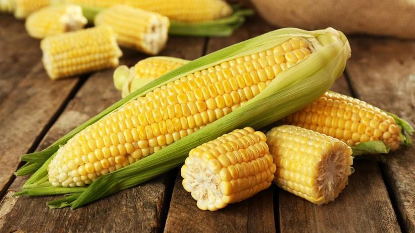 I vantaggi in numeri delle colture Ogm