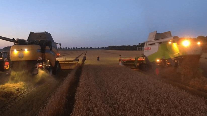 Produzione Ue di mais in Europa - 15% nei prossimi 30 anni