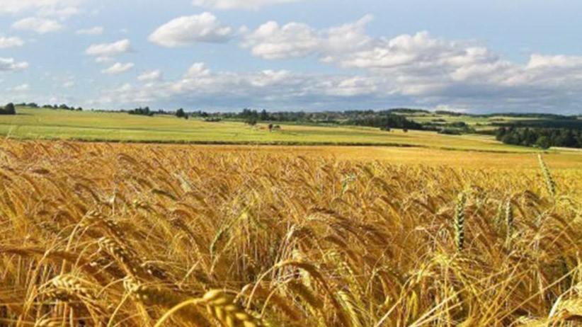 Caratteristiche qualitative delle nuove cultivar di grano tenero