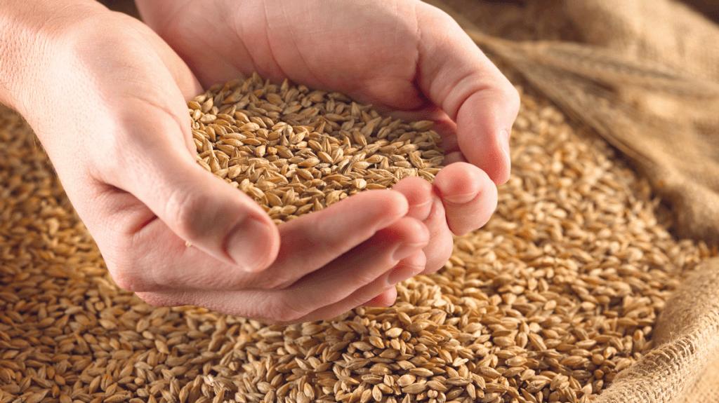 Le nuove varietà di frumento duro iscritte al Registro nazionale nel 2018