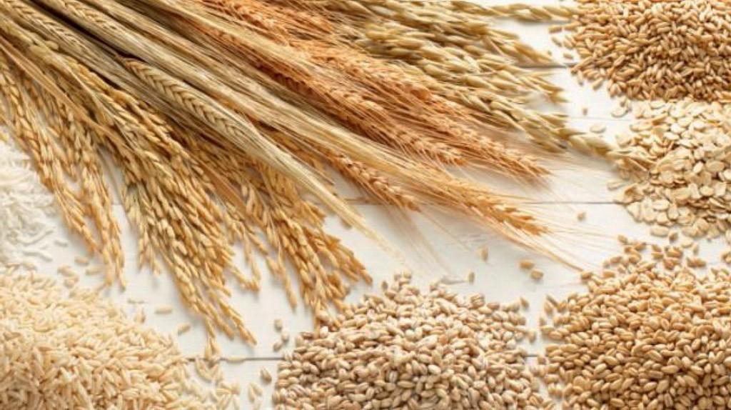 Produzione mondiale di cereali da record
