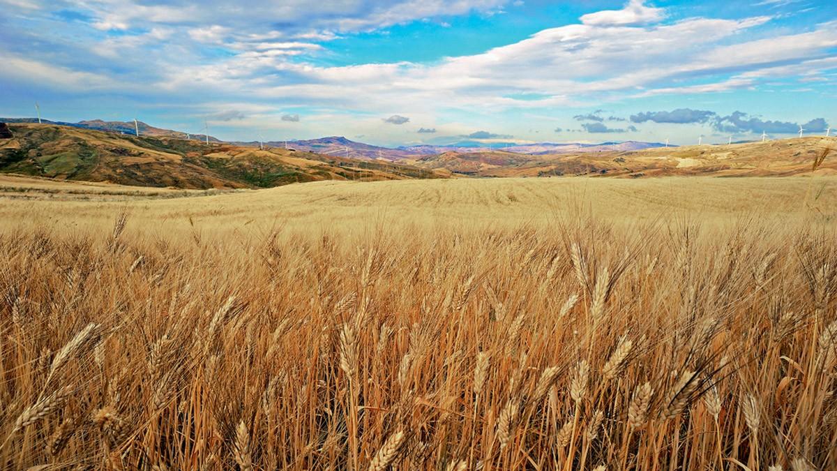 Basta attacchi all'import di grano