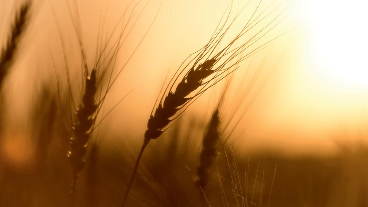 Residui di pesticidi negli alimenti: l'Europa è a norma