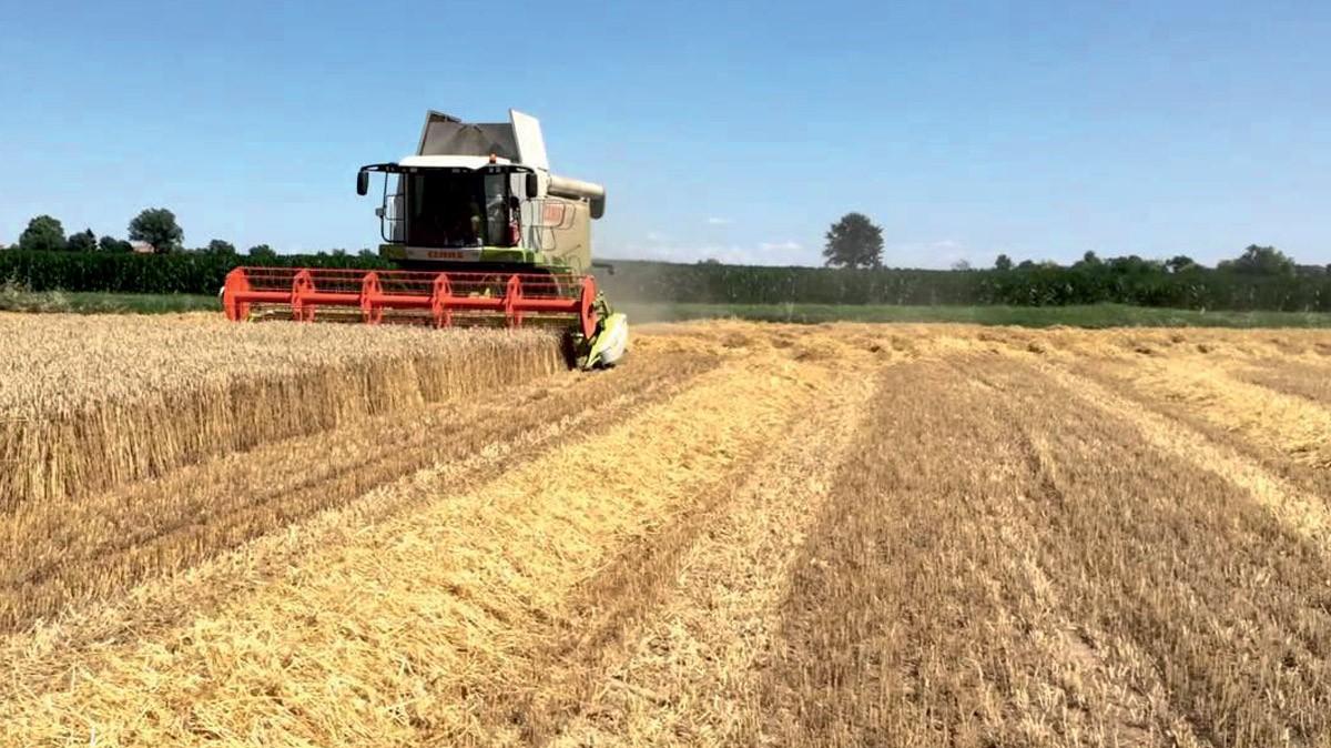 Il corretto controllo della qualità dei grani? Se ne parla a GranoItalia