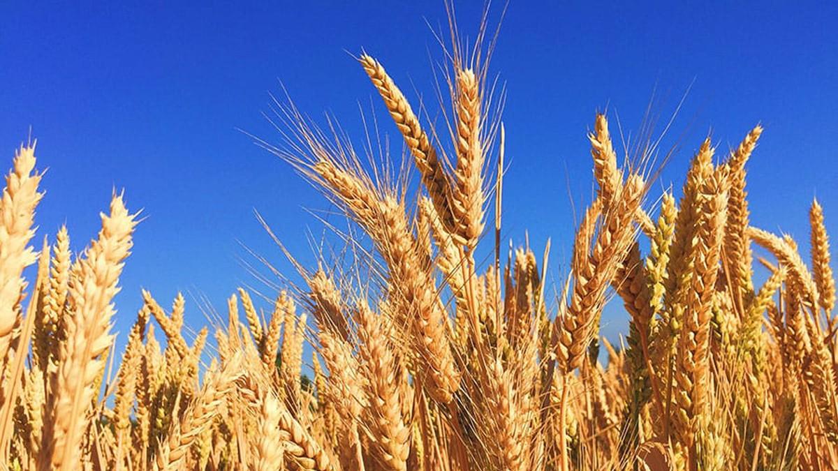 L'agricoltura al centro del Piano per la Ripresa