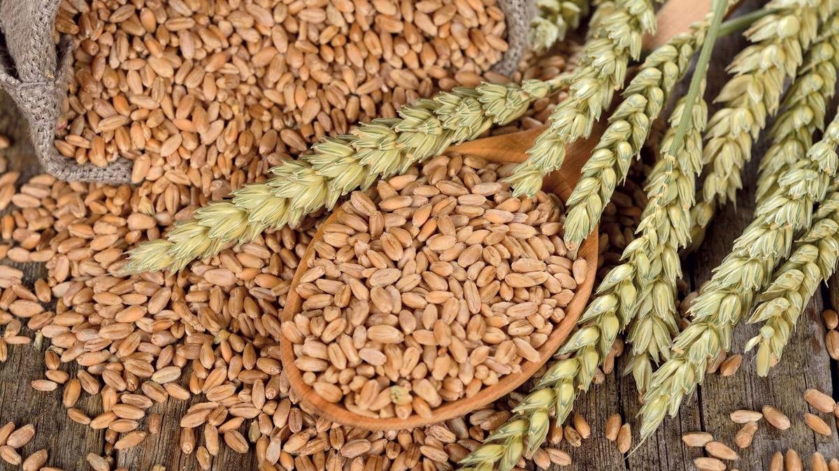 Una guida dedicata ai cereali biologici