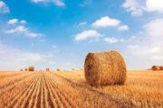 I progetti di ricerca nazionali per la filiera cerealicola