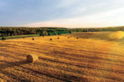 L'assessore all'agricoltura dell'Emilia Romagna Alessio Mammi illustra le scelte della Regione